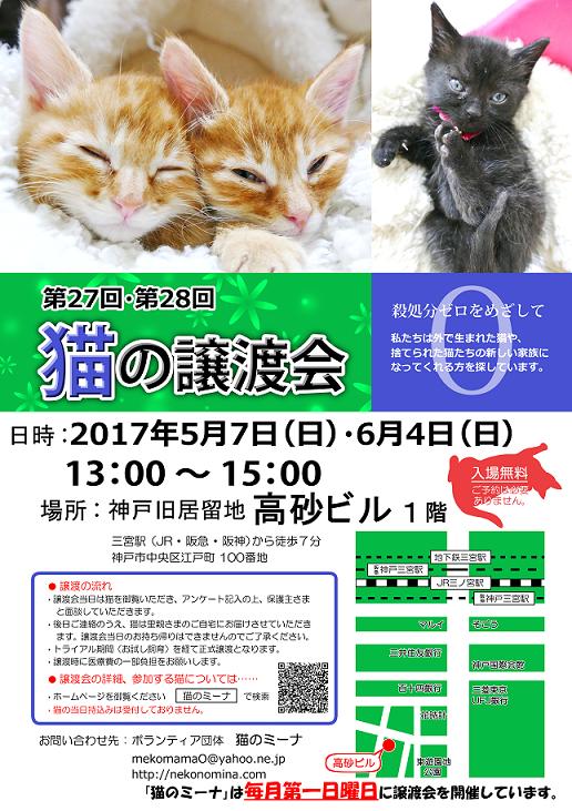 猫の譲渡会_5月