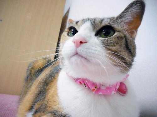みくさんお鼻ピンク