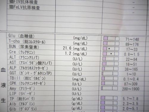 くぅ血液検査
