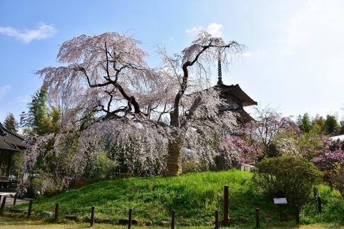 浄專寺 (1)