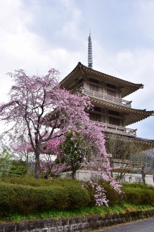 浄專寺 (3)
