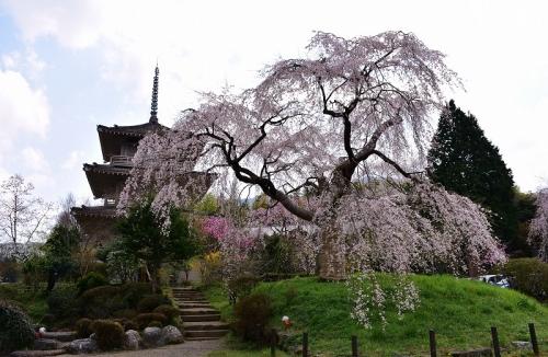 浄專寺 (2)