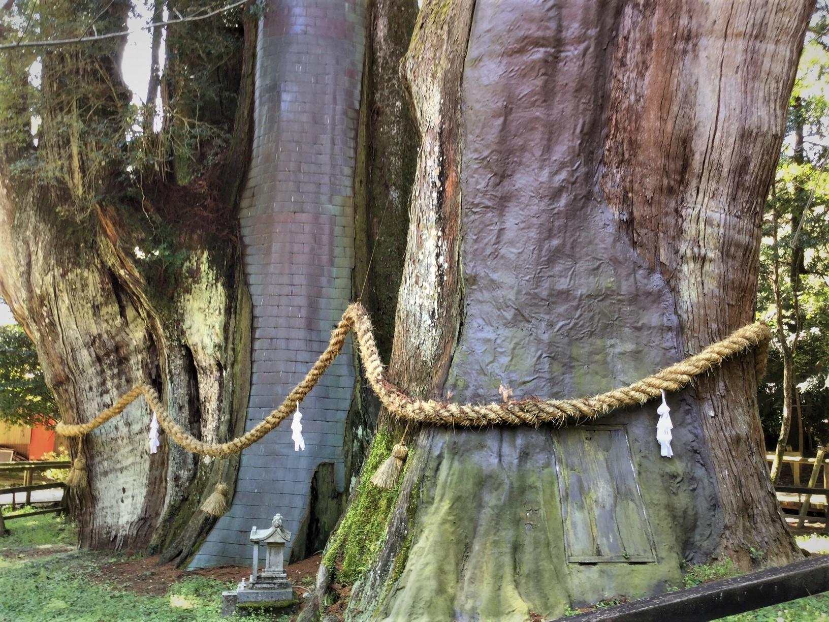 杉の大杉 1