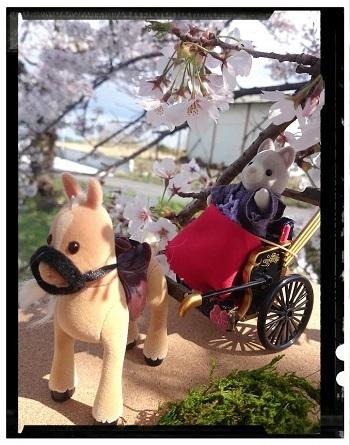 桜の下で③