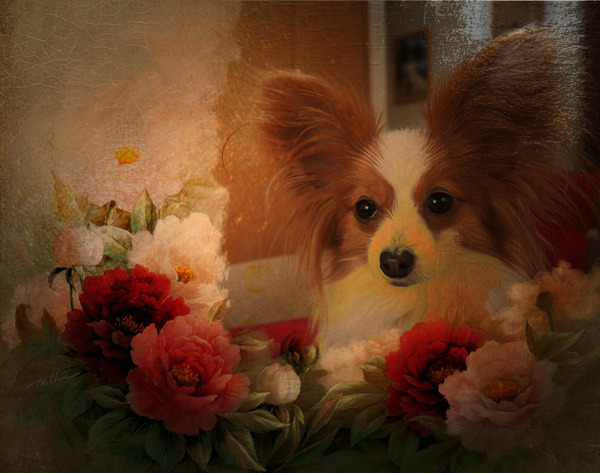 photofacefun_com_1489442455.jpg
