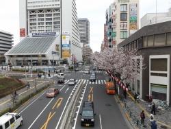 20170407中野駅前桜1