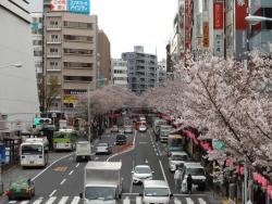 20170407中野駅前桜2