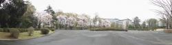 20170408ICU桜6
