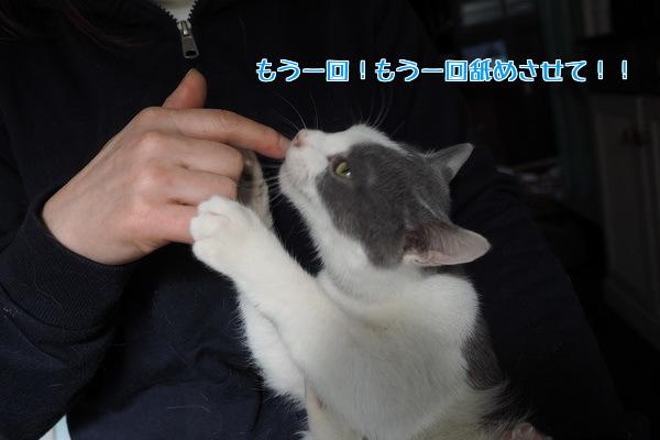 オトナの世界を垣間見たネコ