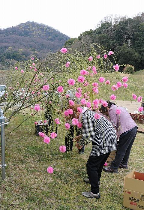 しだれ桜作り 宗吉 29.3.25