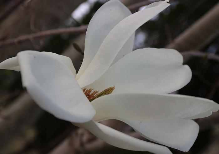 流れるような花 29.3.30