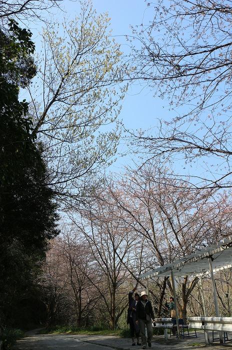 爺神山で青文字見付け! 29.4.4