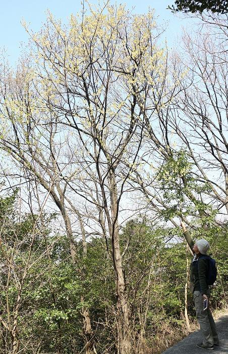 爺神山で青文字さがし 29.4.4