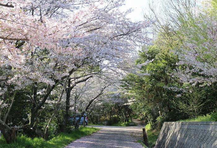 爺神山のお参りの道 29 4 16