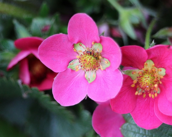 苺赤い花 29.4.19