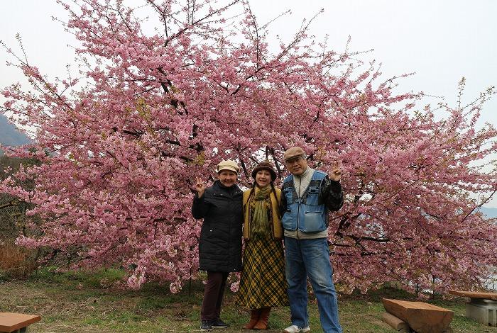 河津桜 吉津  29.3.6