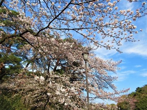 170402-202桜(S)