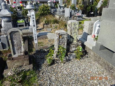 tosashimizu_026.jpg