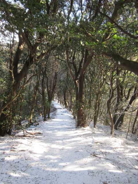 IMG7963JPG雪の登山路
