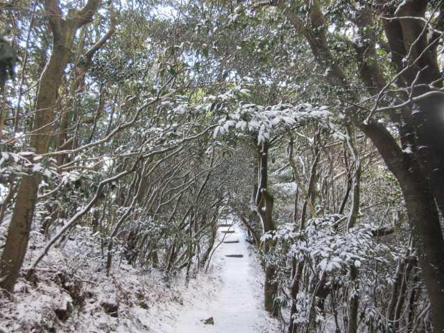 IMG7969JPG山頂下の氷結した階段