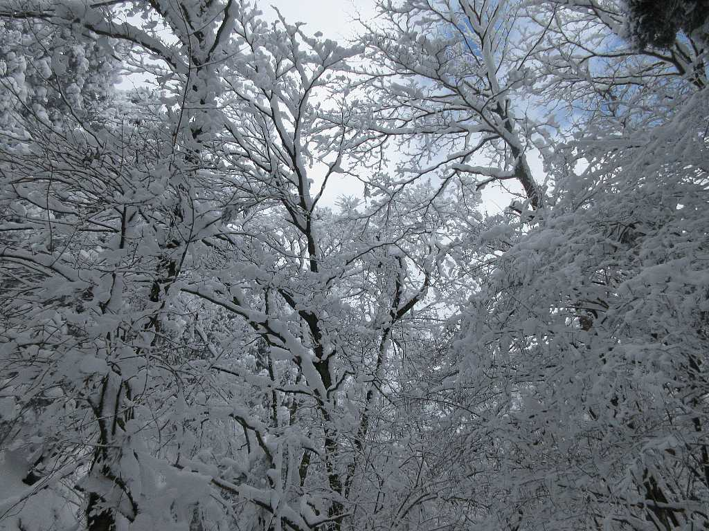 IMG8042JPG青空の雪景色
