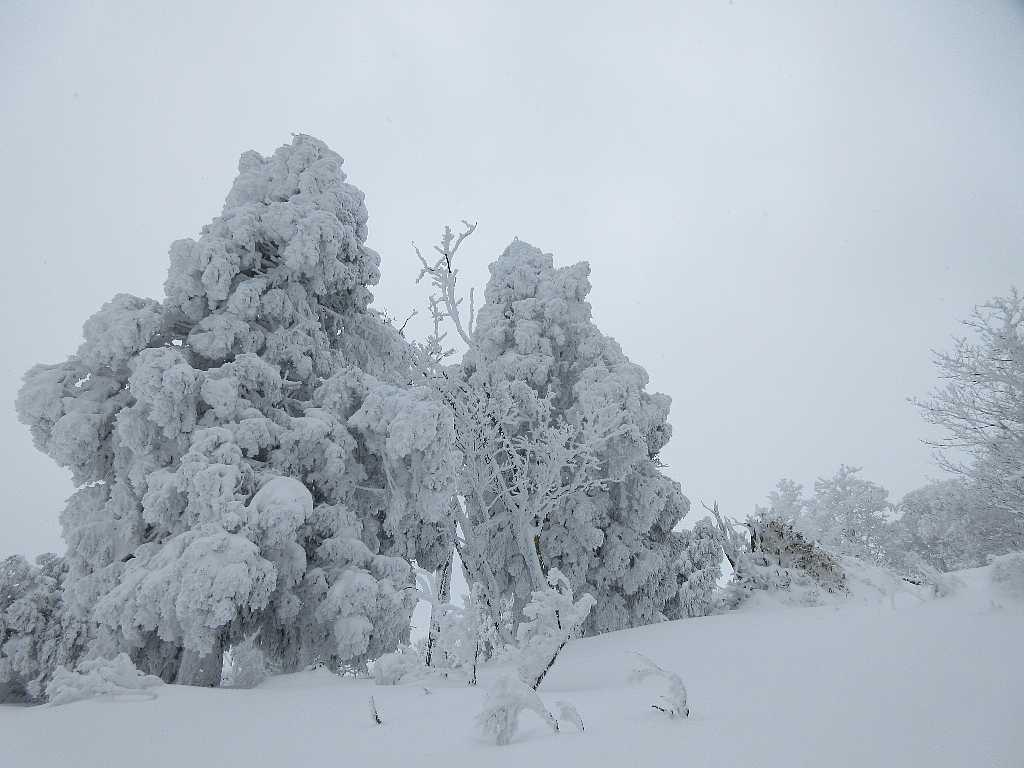 IMG8093JPG雪を被った樹木