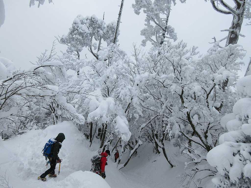 IMG8105JPG雪の下山