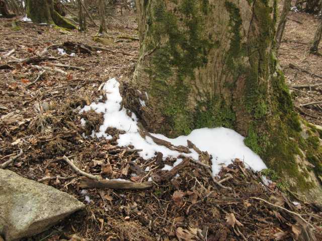 IMG8429JPG名残の」雪
