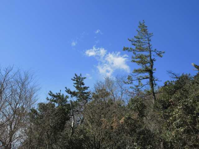 IMG8543JPG縦走路の青空