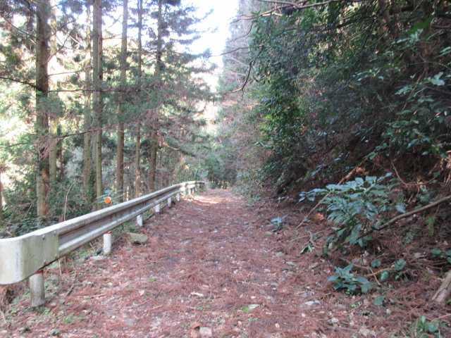 IMG8574JPG広い林道を暫く下る