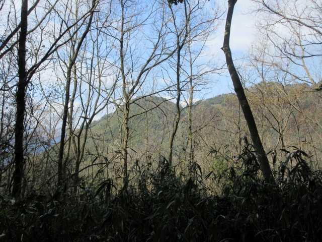 IMG8719JPG朝登った大平山が