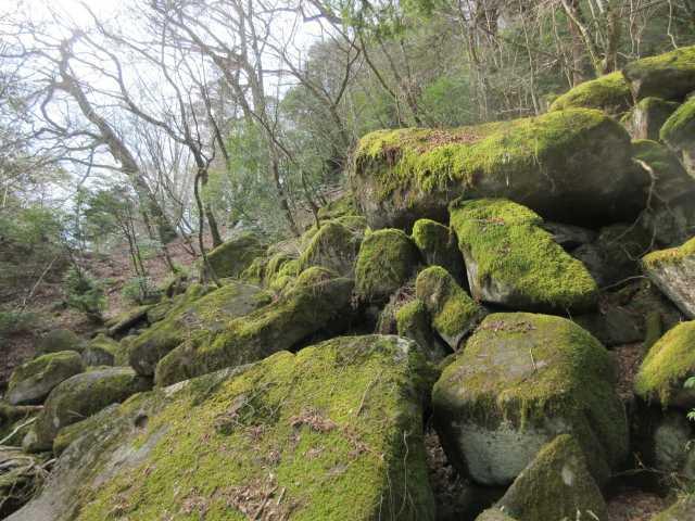 IMG8839JPG苔の岩間