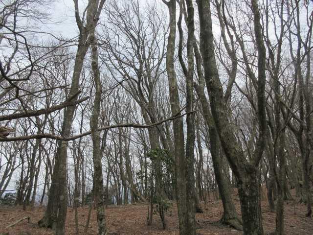 IMG8876JPG落葉樹林を下る
