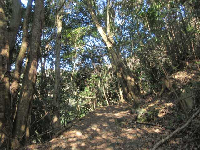 IMG9002JPG歩き易い登山道