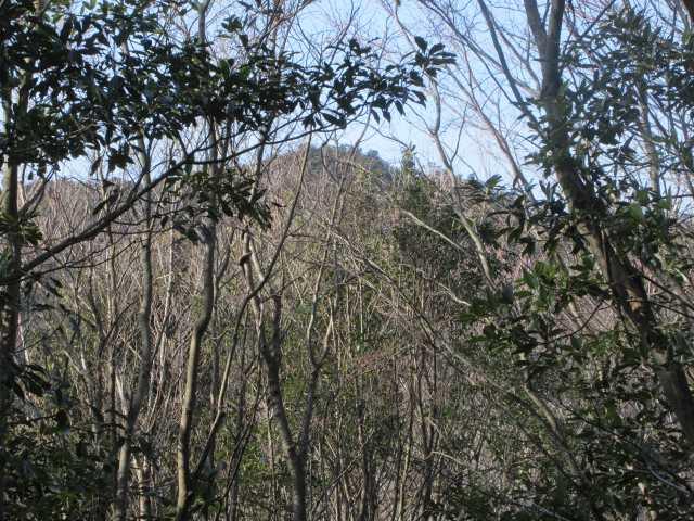 IMG9011JPG樹間から御神体の御許山
