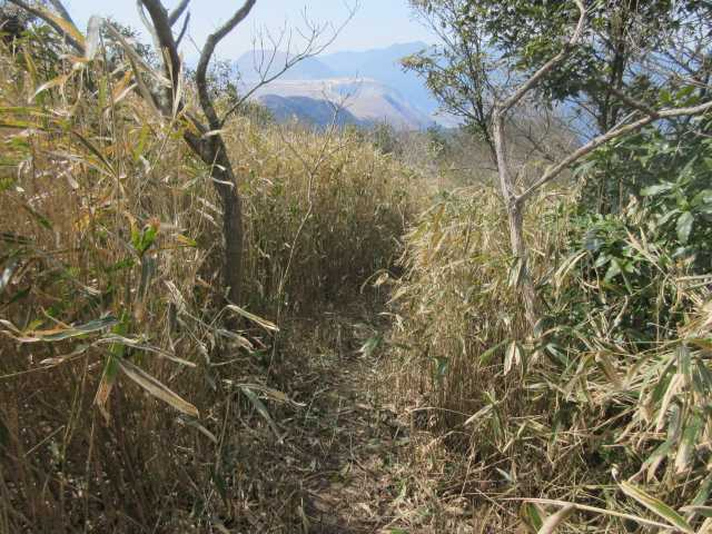 IMG9033JPG午前中登山道の笹刈