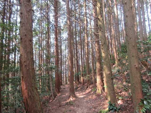 IMG9139JPG木漏れ日の林