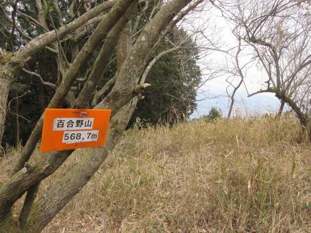 IMG9242JPG笹原の百合野山