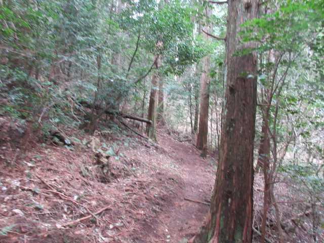 IMG9251JPG気持ちの良い登山道