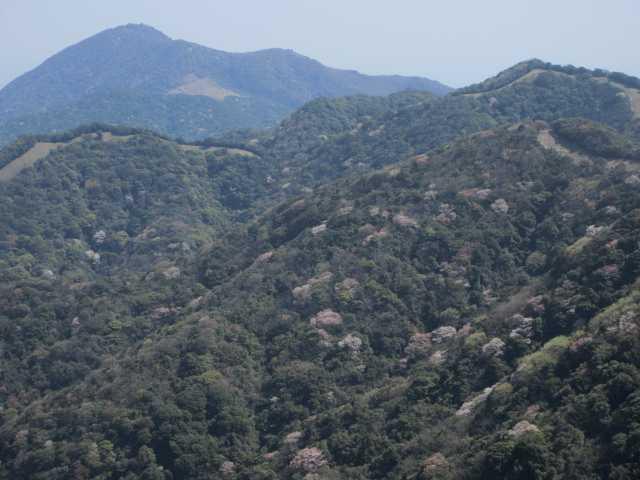 IMG9792JPG山桜と戸ノ上山遠望