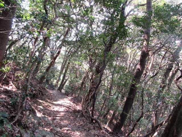 IMG9851JPG樹林帯を下る
