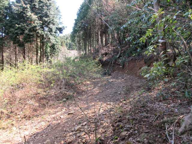 IMG9959JPG林道を左に雑林を登る