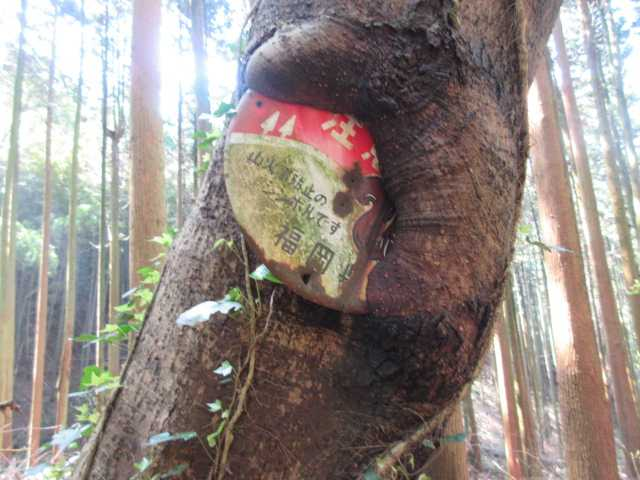 IMG0220JPG標板を噛みこんだ木