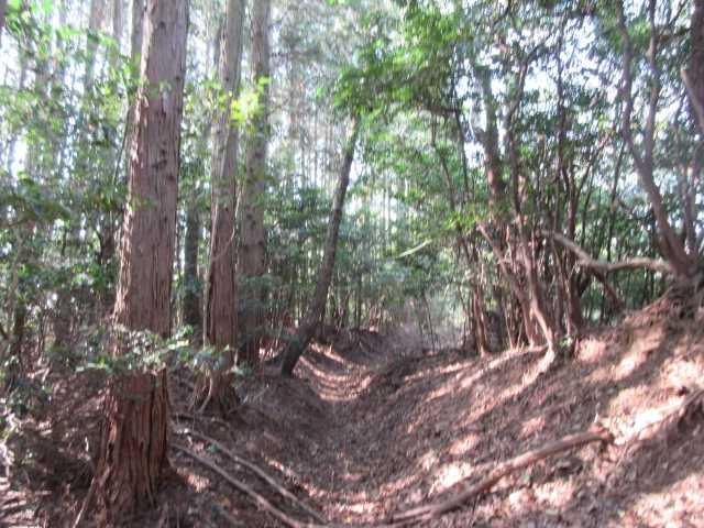 IMG0535JPG山伏古道