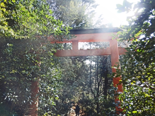1.3弥山登山 (118)13:22_resized