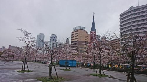 2017新神戸桜 (2)_resized
