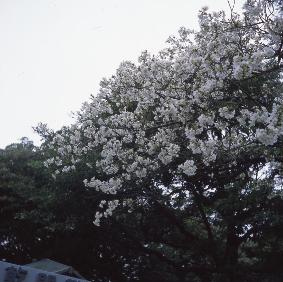 170401_Yashicaflex_005.jpg