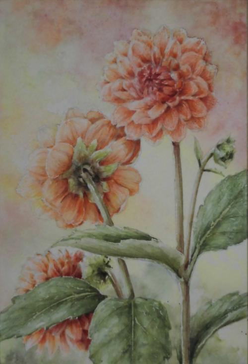 オレンジ色のダリア 1703