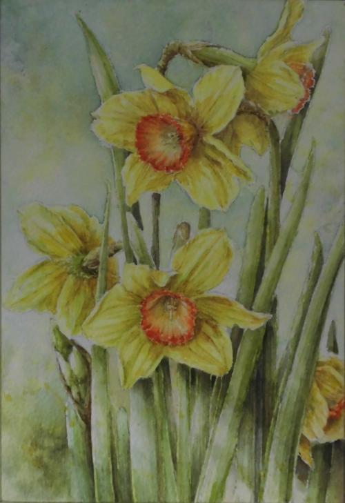 黄色い水仙 1703