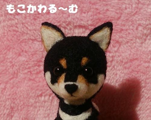 ミニ黒柴3